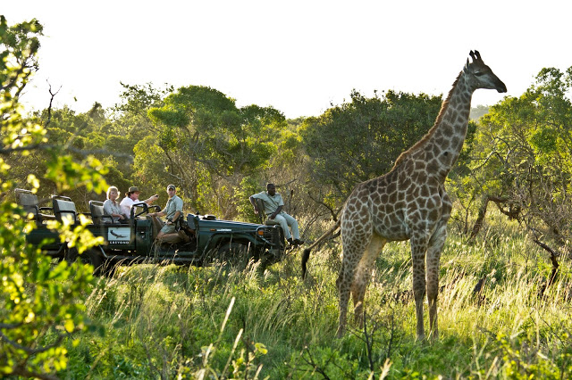Looking for the Big 5 in South Africa with a safari