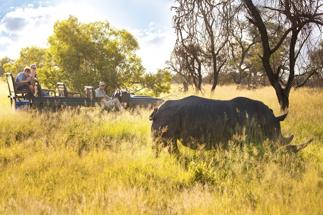 Go in search of the big 5 in South Africa with a jeep safari in the bush