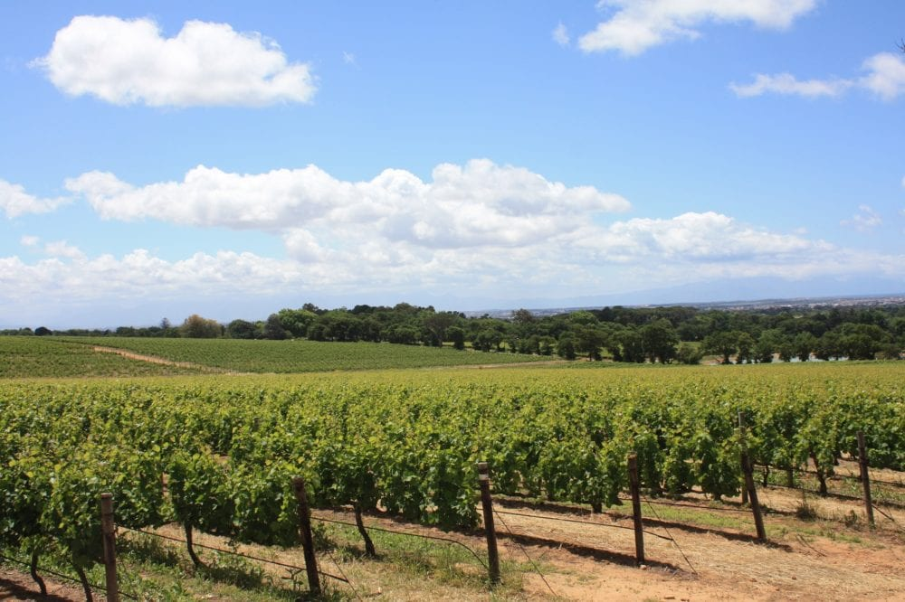 Discover the vineyards of South Africa and enjoy wine tasting